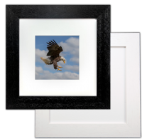 Bald Eagle Framed Print FB_11_5x5
